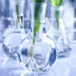 Stock Photo: Chemical laboratory glassware equipment, ecology