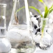 Laboratory glassware containing plants in laboratory — Stock Photo #3797893