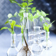 Laboratory glassware, Plant — Stock Photo