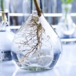 Laboratory glassware containing plants in laboratory - Foto Stock