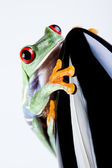 Black Rocket and green frog — Stock Photo