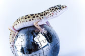 Small gecko reptile lizard — Stock Photo