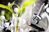 Close-up van planten in proefbuizen laboratorium — Stockfoto