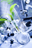 Test tubes with plants — Stock Photo