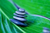 Leaf & Stones — Fotografia Stock