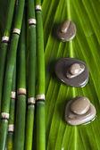 Zen bamboo — Stock Photo