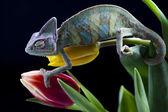Camaleón verde — Foto de Stock