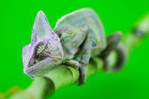 Green animal — Stock Photo