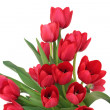 Red Tulip Flowers — Stock Photo #3518915