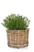 Thyme Herb Plant — Stock Photo