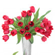 Red Tulip Flowers — Stock Photo