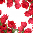 Stock Photo: Red Tulip Flower Beauty