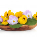 Viola Flower Salad — Stock Photo #3526266