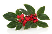 Holly Berry and Leaf Sprig — Stock Photo