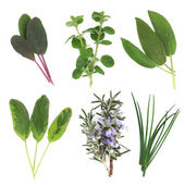 Herb Leaf Selection — Stock Photo