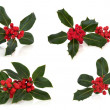 Holly Leaf and Berry Sprigs — Stock Photo