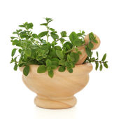 Oregano Herb Leaves — Stock Photo