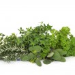 Parsley Sage Rosemary and Thyme Herbs — Stock Photo