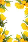 Spring Flower Frame — Stock Photo