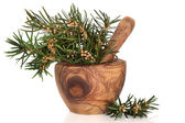 Yew Herb Leaves — Stock Photo