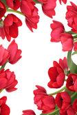 红色郁金香花卉抽象 — 图库照片