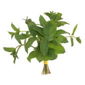 Lemon Balm Herb — 图库照片