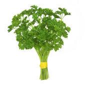 Parsley Herb Plant — Stock Photo