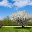 Spring lanscape - Stock Photo