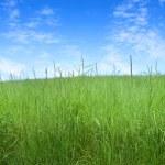 Field of grass — Stock Photo #3243536