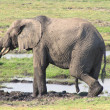 Stock Photo: chobe national park