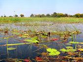 River Okavango — Stock Photo