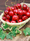 Basket of cherry — Stock Photo