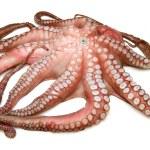 Постер, плакат: Octopus