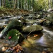 Small forest river — Stock Photo