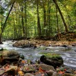 Small forest river — Foto Stock
