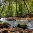 Small forest river — Stockfoto