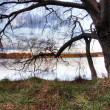 Lake Ginninderra - Stock Photo