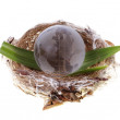 Earth globe in bird's nest - Stock Photo