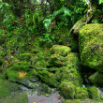Rainforest landscape — Stock Photo