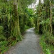 Rainforest landscape - Stock Photo