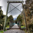Bridge in a New Zealand rainforest — Stock Photo