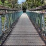 Bridge in a New Zealand rainforest — Stock Photo