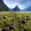 Milford Sound — Stock Photo #3366191