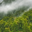 Rainforest landscape — Stock Photo