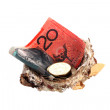 Money in nest — Stock Photo