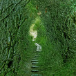 Green path — Stock Photo