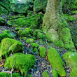 Green path - Stockfoto