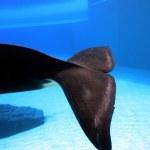 Orca — Stock Photo #3370965