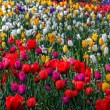 Stock Photo: Flowers in springtime