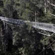 Tree Top Walk - Stock Photo